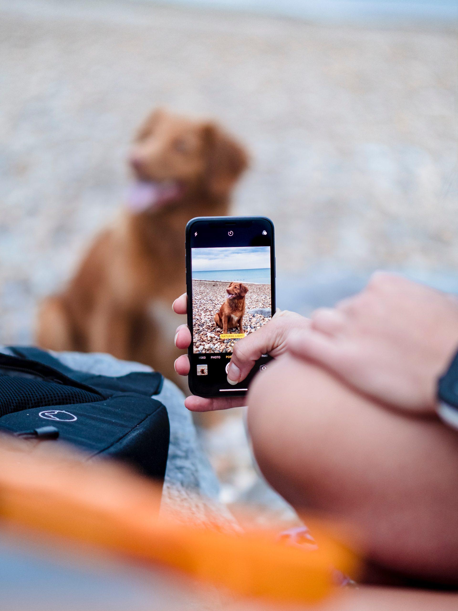 用手機幫狗拍照